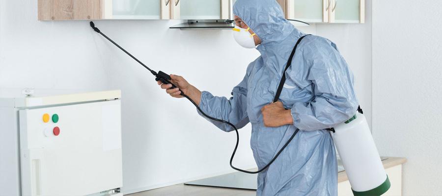 Control y eliminaci n de plagas de insectos rastreros for Control de plagas badajoz